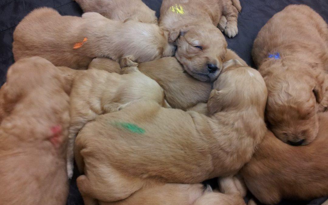 Puppycursus! Wekelijkse instroom mogelijk!